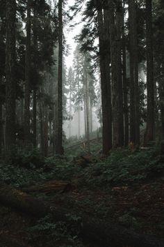 Max Krubsack - Dark Forest