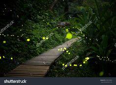 fireflies in the bush at night in taiwan