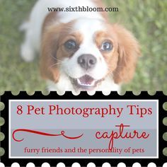 8 Pet Photography Tips Capture Furry Friends and the Personality of Pets ^