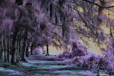 purple tranquility by Beth Pearson on 500px