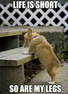 I'd understand if you wanted to see more corgi cuteness, click the image and get what you want!  #cute #corgi