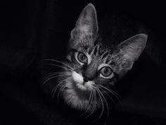 #cute #kitten #mew #b/w