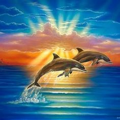dolphins.