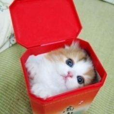 Cat in the box!