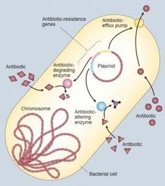 The ways that bacteria can be resistant to antibiotics