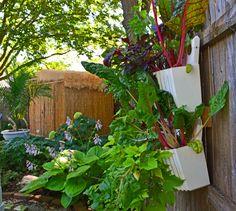 8 Conscious Tips AND Tricks: Backyard Garden Wall Patio backyard garden decor tips.Backyard Garden Inspiration backyard garden decor tips. Vertical Garden Planters, Vertical Vegetable Gardens, Vegetable Gardening, Planters Shade, Fence Planters, Small Backyard Gardens, Backyard Garden Design, Fence Garden, Gravel Garden