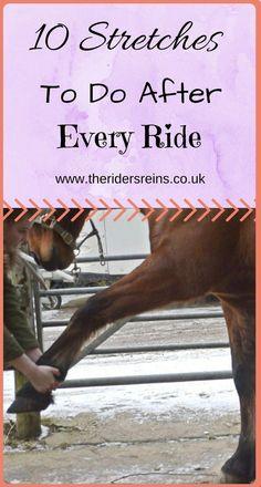 33 Best Horseback Riding Instruction images in 2019   Equestrian