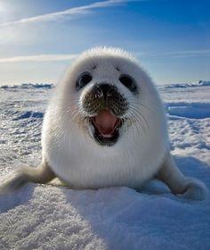 Arctic!