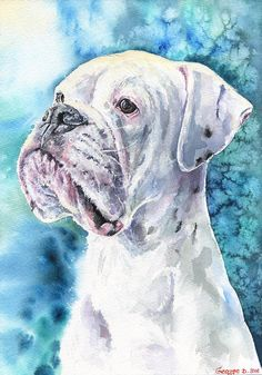 White Boxer watercolor print of the by GeorgeWatercolorArt on Etsy