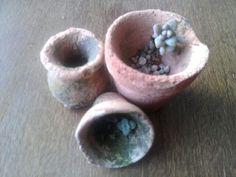 Mudinhas de suculentas nascendo em mini vasinhos de barro.