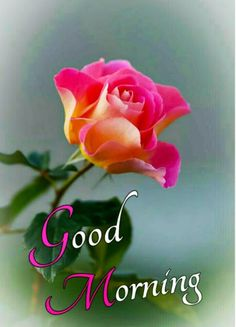 Good Morning Flowers Pictures, Good Morning Beautiful Flowers, Good Morning Roses, Good Morning Beautiful Images, Good Morning Picture, Morning Pictures, Good Morning Wishes Friends, Good Morning Happy Sunday, Happy Weekend