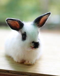 Baby Bunny WhiteBlack