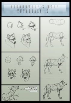 Mirdonwolf's basic wolf tutorial by =The-TrollMir on deviantART