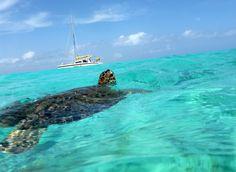 Schildpad Klein Curacao
