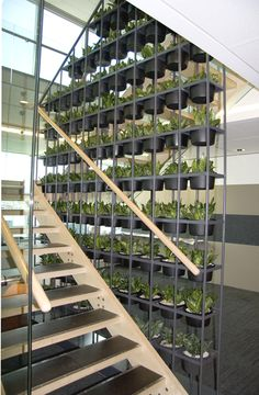 Greening your stairwell! Why not use a vertical garden? Visit www.greendesign.com.au