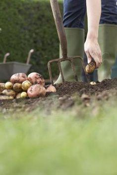 Cómo congelar las patatas crudas    | eHow en Español