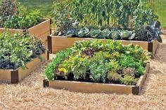 Einen kleinen Nutzgarten sollten Anfänger vorziehen