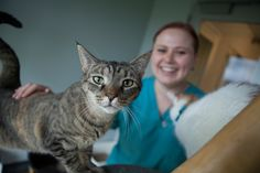 Did you know?! The Feline Health Center offers a variety of online resources for cat owners.