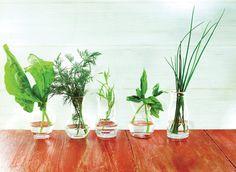 Fresh Herbs Fresh Herbs, Botany, Glass Vase, Alcoholic Drinks, Wine, Plants, Image, Home Decor, Flora