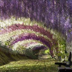 Jardín Kawachi Fuji, Japón