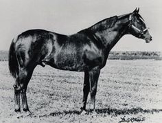 Go Man Go | Go Man Go, the 1953 stallion, made his name in racing. AQHA file photo ...