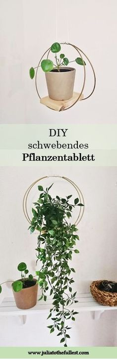 High out: bandeja de plantas DIY - Pflanzen.