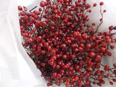 Wild rose hips natural for decorating Christmas Wedding Winter
