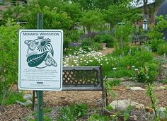 Create a Monarch Waystation - make a home for these endangered butterflies by planting milkweek