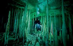 Stalagmite forest in Dan's Cave on Abaco Island