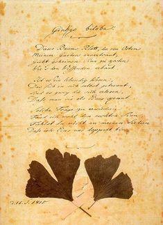 Goethe - Gingko biloba