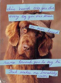 I've heard once you die every dog you once knew or ever loved runs towards you to say hi #postsecret