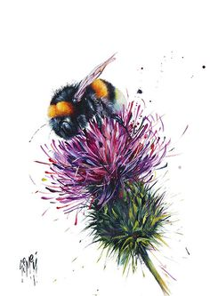 Barrie (Limited Edition) by Georgina McMaster - Art Prints Gallery Thistles Art, Art Prints, Art Painting, Bee Art, Animal Art, Art Drawings, Drawings, Bee Painting, Thistle Tattoo