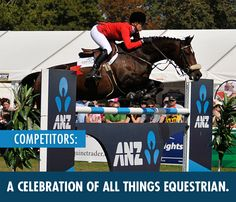 Horse Of The Year :: Home Equestrian, Attraction, Things To Do, Names, Events, Horses, Baseball Cards, Things To Make, Horseback Riding