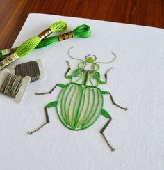 Anatomical Beetle   Craftsy
