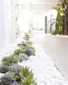 Growing Succulents Inside and Out | Rue ähnliche tolle Projekte und Ideen wie im Bild vorgestellt findest du auch in unserem Magazin . Wir freuen uns auf deinen Besuch. Liebe Grüß