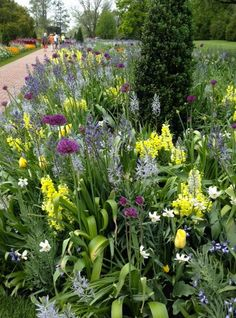 Late blooming mixed bulb display with Snapdragons (Antirrhinums spp.) at Longwood Gardens in Kennett Square, Pennsylvania, U.S. This includes Fritillaria, Camassia, Allium, Poeticus Daffodil, Tulips, & Spanish Bluebells.