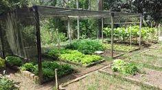Resultado de imagem para como fazer horta na chacara Plants, Image, Raised Beds, Vegetable Gardening, Barbie Dolls, Flowers, Flora, Plant