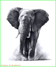 Browse through a collection of wildlife paintings and drawings by Richard Symonds. The majority are available as limited edition prints to buy from this shop. Elephant Tattoos, Elephant Art, African Elephant, African Animals, Elephant Sketch, Elephant Drawings, Elephant Paintings, Animal Tattoos, Tiger Drawing