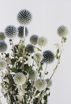 Dried Thistle Bunch | floresdelsol on Etsy