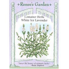 Renee's Garden Nicotiana Scented Jasmine Alata (Heirloom) www.