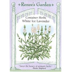 Renee's Garden Nicotiana Scented Jasmine Alata (Heirloom) www. Lavender Seeds, Growing Lavender, Lavender Garden, Lavander, Decoupage, Seed Packaging, Ground Cover Plants, Moon Garden, Organic Seeds