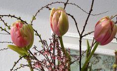 Tulpengeflüster °Französische Tulpen