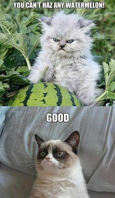 Lol I have no idea why I laughed so hard.