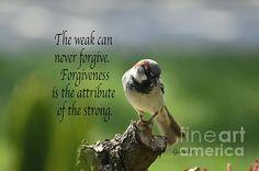 Forgiveness saying