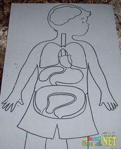 okul öncesi vücudumuz - Google'da Ara