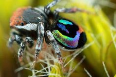 Spiders: From Dangerous to Fascinating   Spicedogs