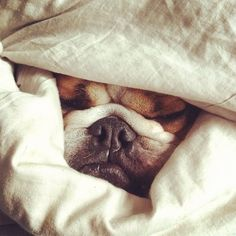 Smoosh (via baggybulldogs.wordpress.com)