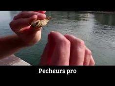 Technique de pêche à la dorade avec Francis COUZINET et OCQUETEAU - YouTube