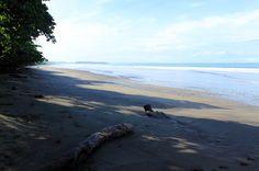 hermosa beach attraction dominical log   - Costa Rica