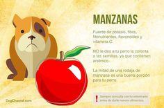 Frutas para tus perros: Manzanas  Importante leer completo.  #PetsWorldMagazine #RevistaDeMascotas #Panama #FrutasParaTuMascota #Mascotas #MascotasPty #MascotasPanama #Salud #Nutricion